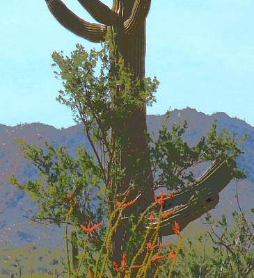 Photograph - Sonoran Desert Springing by Judy Kennedy