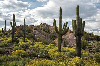 Photograph - Sonoran Desert Springtime 2 by Dave Dilli