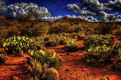 Photograph - Sonoran Desert Winter 02 by Roger Passman