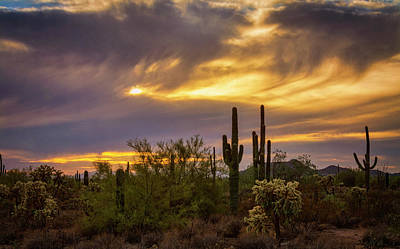 Photograph - Sonoran Fall Sunset  by Saija Lehtonen