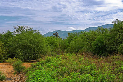 Art Print featuring the photograph Sonoran Greenery H30 by Mark Myhaver