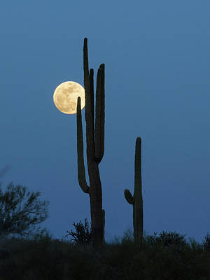 Photograph - Sonoran Moon by Sue Cullumber