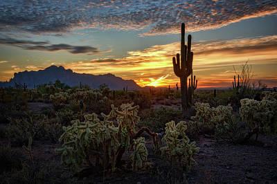 Photograph - Sonoran Morning Calling  by Saija Lehtonen