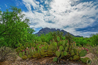 Photograph - Sonoran Morning H1854 by Mark Myhaver