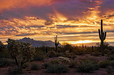 Photograph - Sonoran Saguaro Sunrise  by Saija Lehtonen