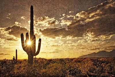 Photograph - Sonoran Silhouette by Leda Robertson