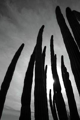 Photograph - Sonoran Spires by Robin Street-Morris