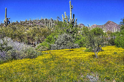 Photograph - Sonoran Spring 3 by Roger Passman