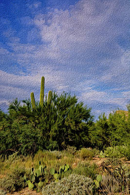 Mark Myhaver Rights Managed Images - Sonoran Summer op18 Royalty-Free Image by Mark Myhaver