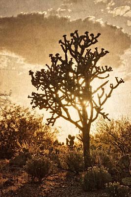 Photograph - Sonoran Sun by Leda Robertson