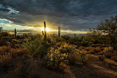 Photograph - Sonoran Sunshine  by Saija Lehtonen