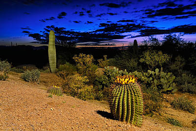 Photograph - Sonoran Twilight by Mark Myhaver