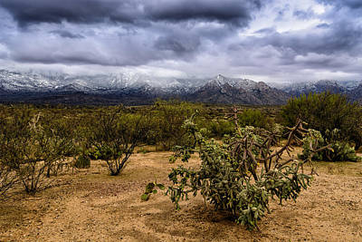 Photograph - Sonoran Winter H44 by Mark Myhaver
