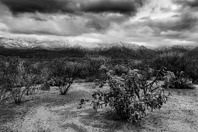 Photograph - Sonoran Winter H45 by Mark Myhaver
