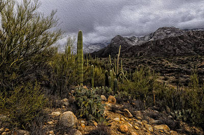 Mark Myhaver Rights Managed Images - Sonoran Winter No.3 Royalty-Free Image by Mark Myhaver