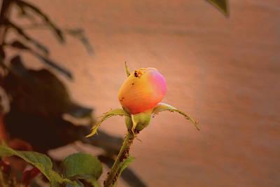 Photograph - Soon A Beauty #b3 by Leif Sohlman