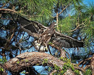 Photograph - Soon After Fledging by Ronald Lutz