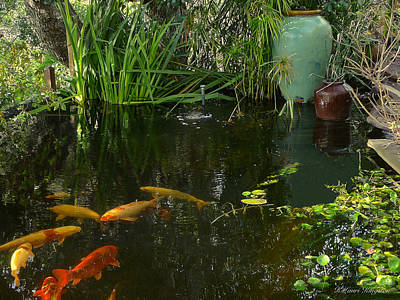 Photograph - Soothing Koi Pond by K L Kingston