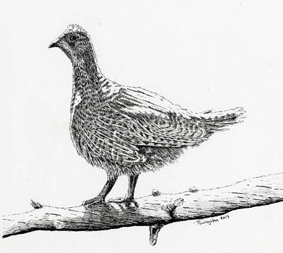 Sooty Grouse Art Print