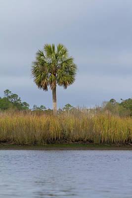 Photograph - Sopchoppy Palm by Paul Rebmann