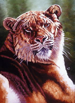 Sophie The Liger Art Print by Barbara Keith