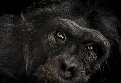 Chimpanzee Photograph - Sorrow by Paul Neville