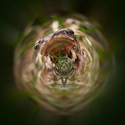 Sorry Said The Frog 1 Art Print by Jouko Lehto