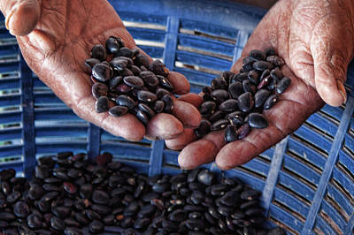 Photograph - Sorting Black Beans In Guatemala by Tatiana Travelways