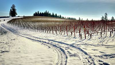 Jerry Sodorff Royalty-Free and Rights-Managed Images - Soter Vineyard Winter by Jerry Sodorff