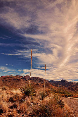 Photograph - Sotol Vista 4 by Judy Vincent