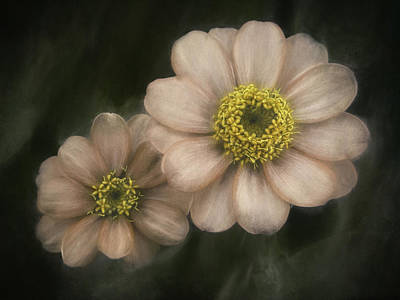 Flower Blossom Photograph - Soul Mates by Scott Norris