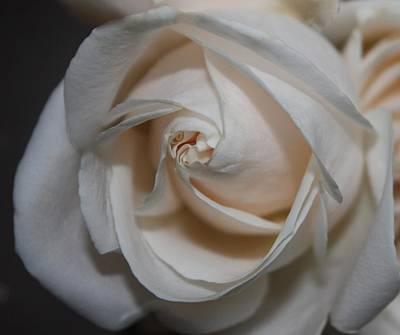 Soul Of A Rose Art Print by Nancy TeWinkel Lauren