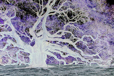 Soul Of The Angel Oak Original by Suzanne Gaff