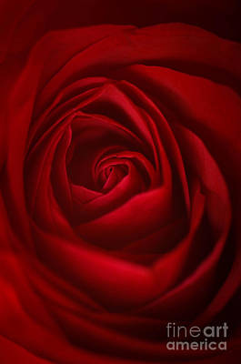 Photograph - Soul Of The Rose by Amy Porter