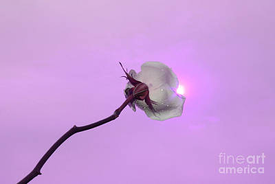 White Flower Photograph - Soul Secret by Krissy Katsimbras