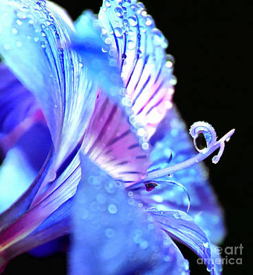 Blue Flowers Photograph - Soul Shelter by Krissy Katsimbras