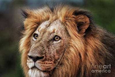Wall Art - Photograph - Soulful Eyes - Colour by Pippa Dini