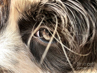 Photograph - Soulful Eyes by Laura Forde