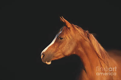 Photograph - Soulful Gaze Of A Horse by Michelle Wrighton
