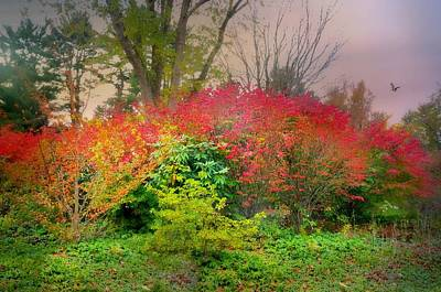 Photograph - Sound Of Color by Diana Angstadt