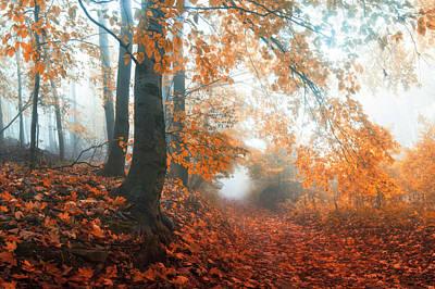 Of Trees Photograph - Sound Of Fall by Janek Sedlar