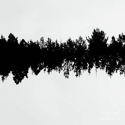 White Background Photograph - Sound Waves Made Of Trees Reflected by Jorgo Photography - Wall Art Gallery