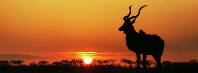 Photograph - South Africa Sunset Kudu Silhouette by Susan Schmitz