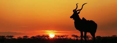 South Africa Sunset Kudu Silhouette Art Print