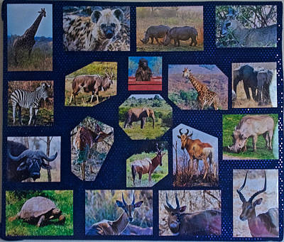 Hager Wall Art - Photograph - South African Animal Photo Assemblage  by Ruth Hager