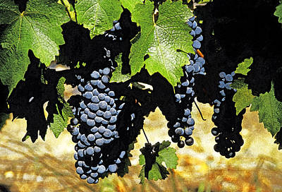 South African Vineyard Art Print by Dennis Cox