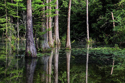 Swamp Thing Photograph - South Alabama Serenity by JC Findley