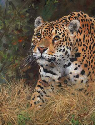 Wall Art - Painting - South American Jaguar Big Cat by David Stribbling