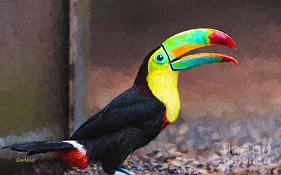 Toucan Mixed Media - South American Toucan On Gravel by Garland Johnson