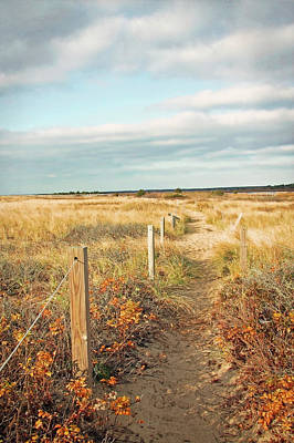 South Cape Beach Trail Art Print by Brooke T Ryan
